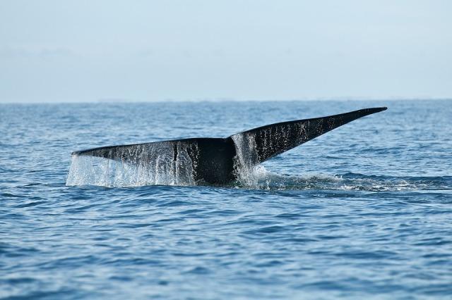 кит интересные факты