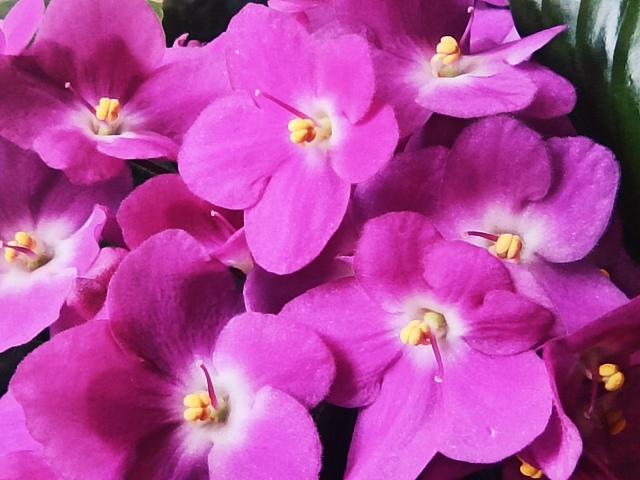 цветы помогающие выйти замуж