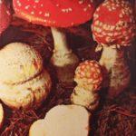 мухомор красный ядовитый или съедобный