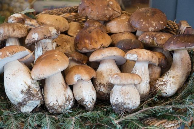 холодный способ засолки грибов