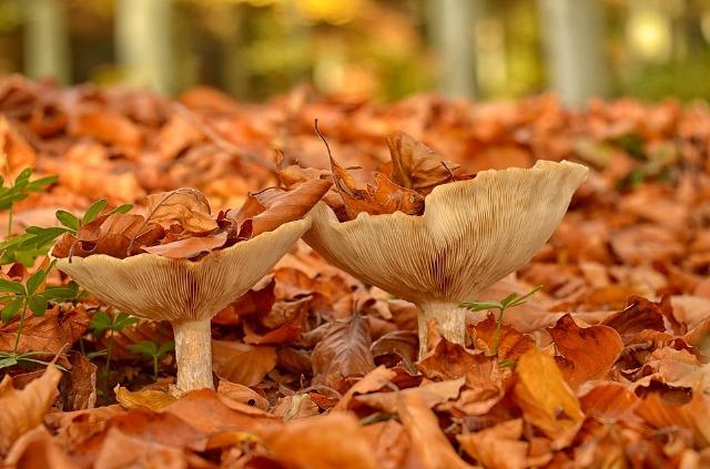 солить грибы в домашних условиях