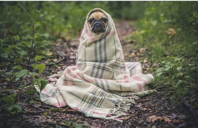 как носить пояс из собачьей шерсти