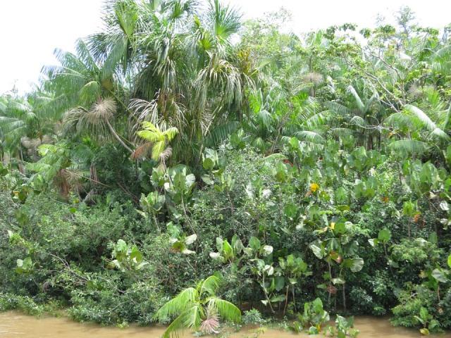 Интересные факты о реке Амазонка