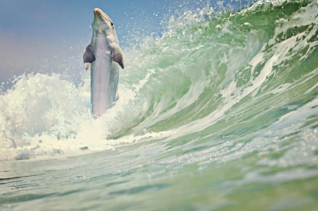 Интересные факты про дельфинов для детей и взрослых