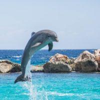 """<span class=""""title"""">Про дельфинов и китов для детей</span>"""