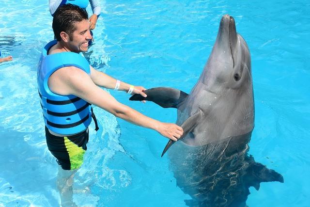 Киты и дельфины: что можно рассказать детям