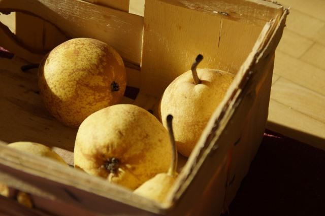 Технология хранения яблок и груш в домашних условиях