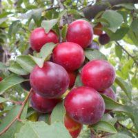 нехватка элементов питания у растений