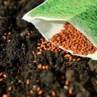 обеззараживание семян