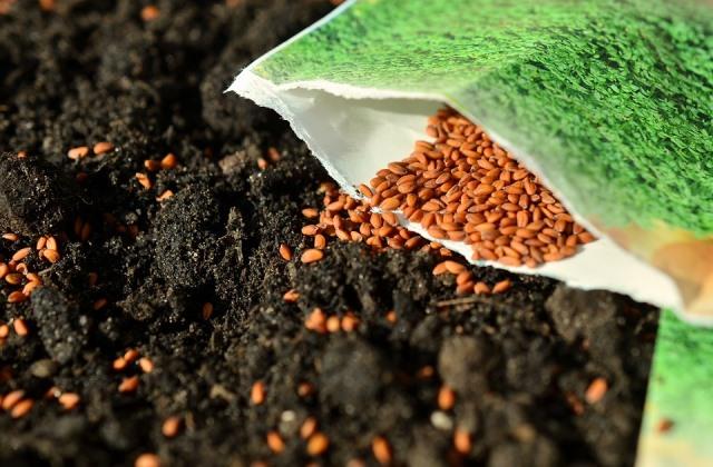 обеззараживания семян