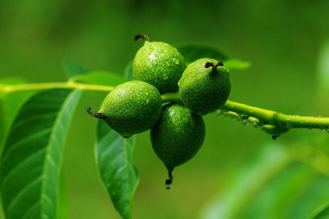 дерево из грецкого ореха