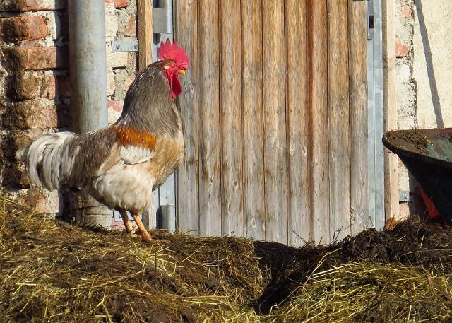 куриные органические удобрения
