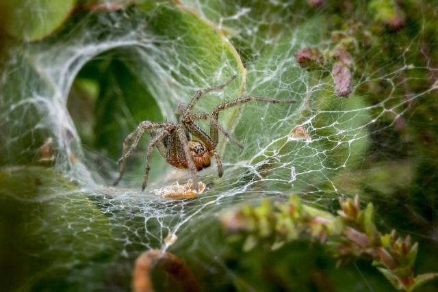 паук насекомое