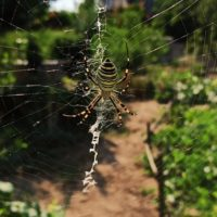 """<span class=""""title"""">О пауках для детей, основные и интересные факты</span>"""
