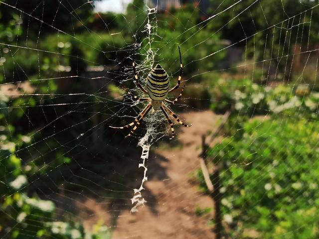 детям про пауков