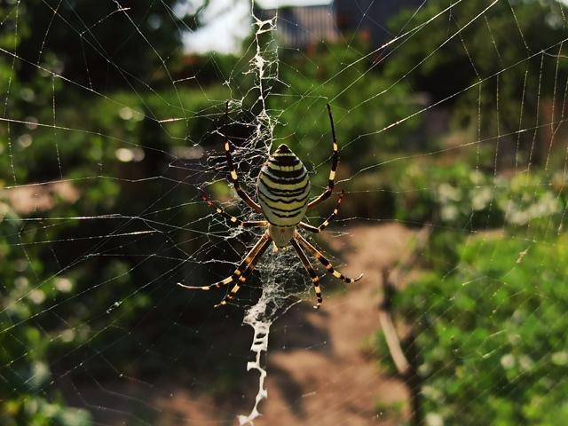 паук какое насекомое