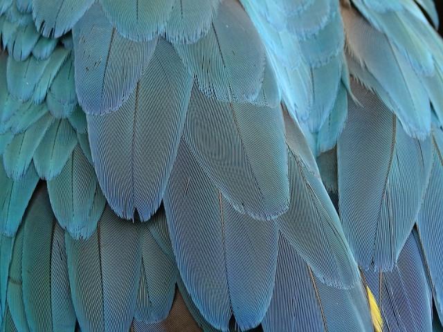 про птиц для детей